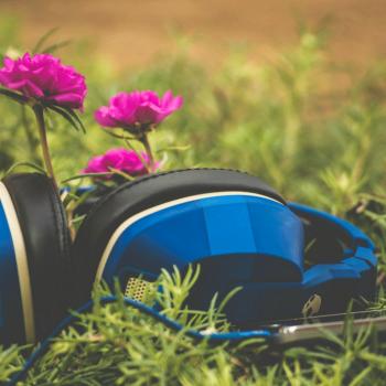 اثر موسیقی بر رشد گیاه